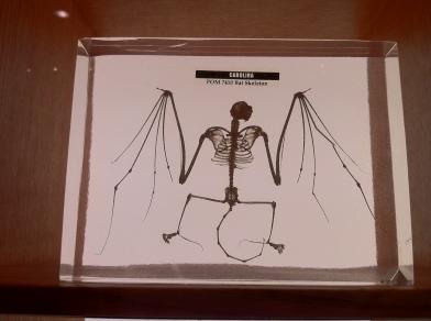 Freaky Bat Skeleton