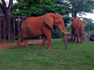 Dirty Elephant